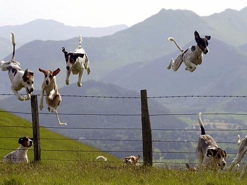 dog-jumping-fence